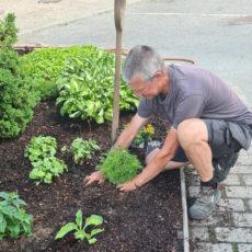 Bistand med gartnerarbeid og skjøtselsplaner